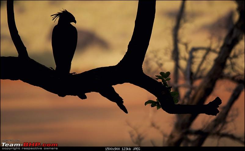 Satpura National Park - The little jewel of MP-_mg_6649.jpg