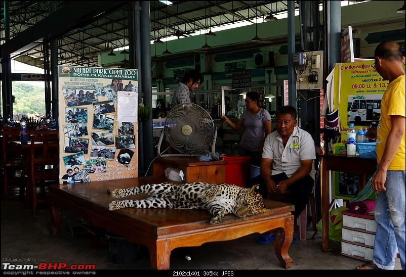 Thailand   Third Time-leopard.jpg
