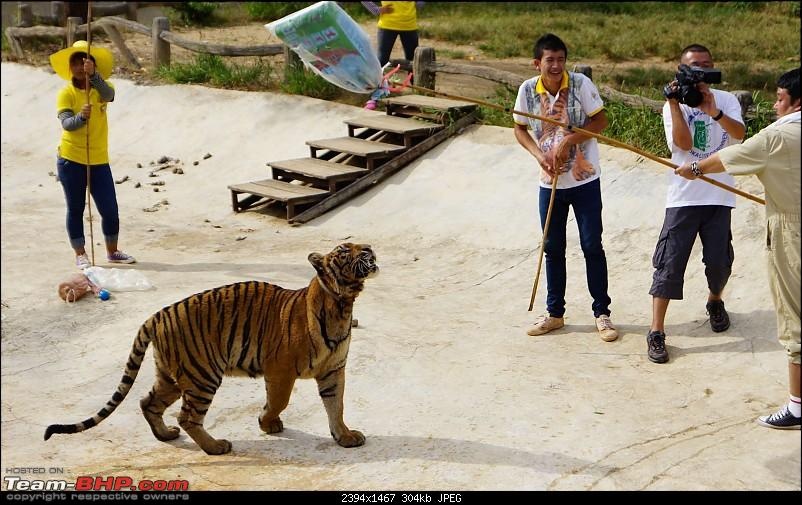 Thailand | Third Time-tiger-21.jpg