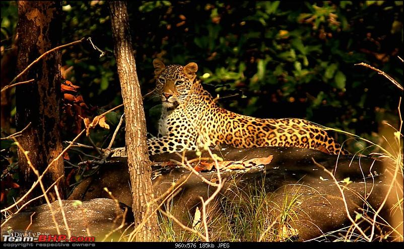 Satpura National Park - The little jewel of MP-247371_402359216498323_1938521883_n.jpg
