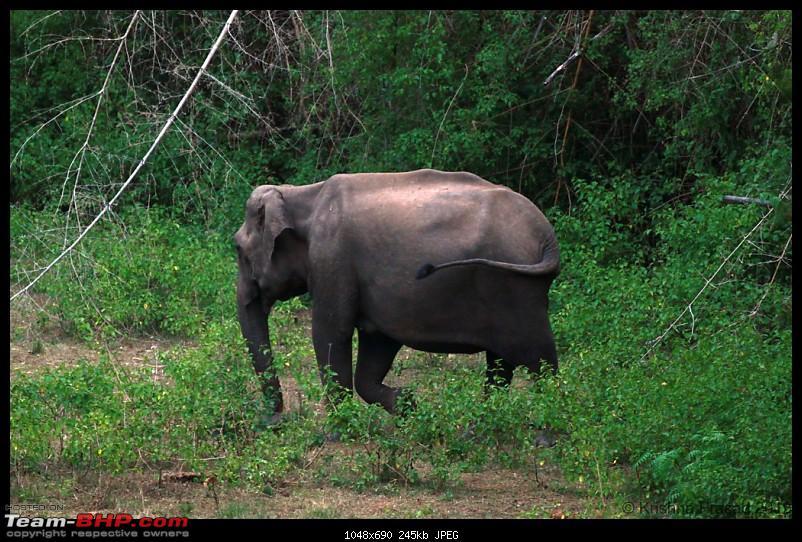 Bandipur Visit - June 2012 Edition-img_7883.jpg