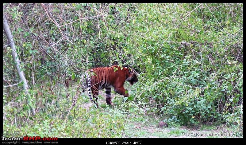 Bandipur Visit - June 2012 Edition-img_8430.jpg