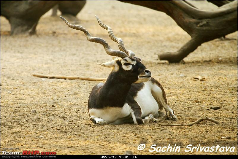 Children's day: Trip to the Delhi Zoo-img_3185.jpg