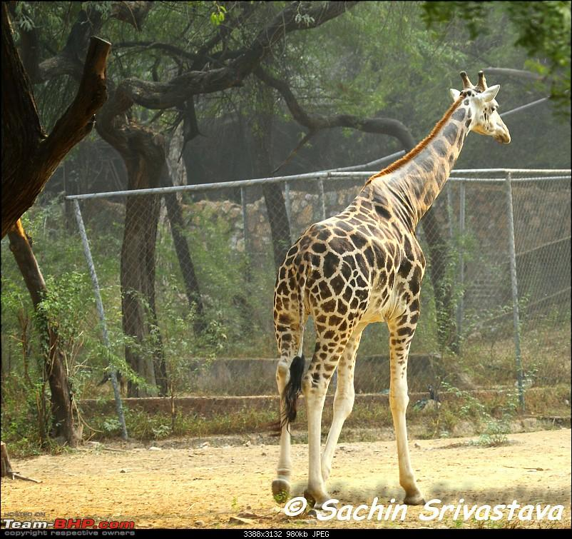 Children's day: Trip to the Delhi Zoo-img_3205.jpg