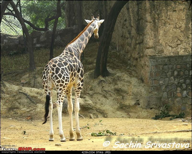 Children's day: Trip to the Delhi Zoo-img_3214.jpg