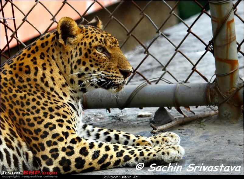 Children's day: Trip to the Delhi Zoo-img_3500.jpg