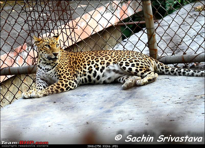 Children's day: Trip to the Delhi Zoo-img_3530.jpg