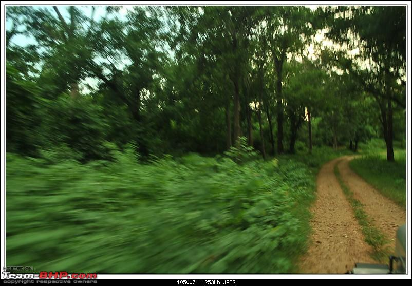 Rambling inside the forests of Jharkhand-86.jpg