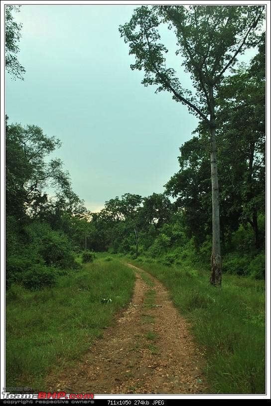 Rambling inside the forests of Jharkhand-87.jpg