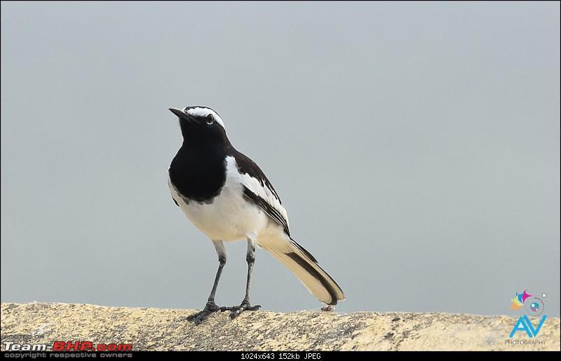My Birding experiences around Chennai-20121126dsc_8134.jpg
