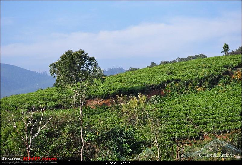 The Jet� learns to make cheese: A farmstay experience in the Nilgiris-dsc_0282.jpg
