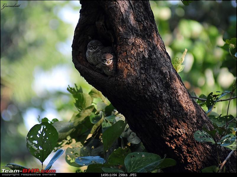 Gurgaon - Sariska - Gurgaon - Phew...Finally sighted one of the Tiger Cubs of ST2-7729.jpg