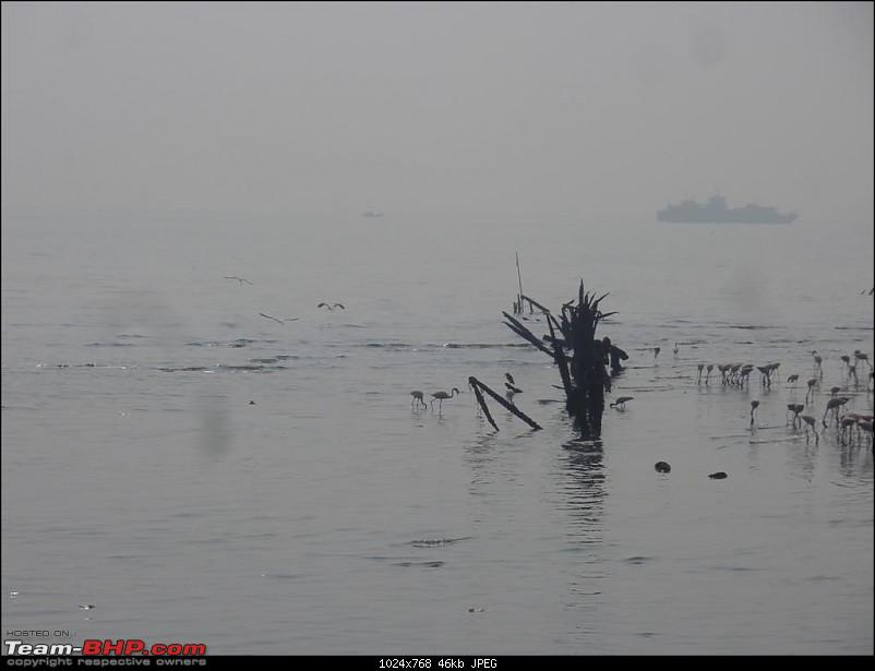 PICS: Flamingoes start flying into Sewri, Mumbai-p1140800-large.jpg