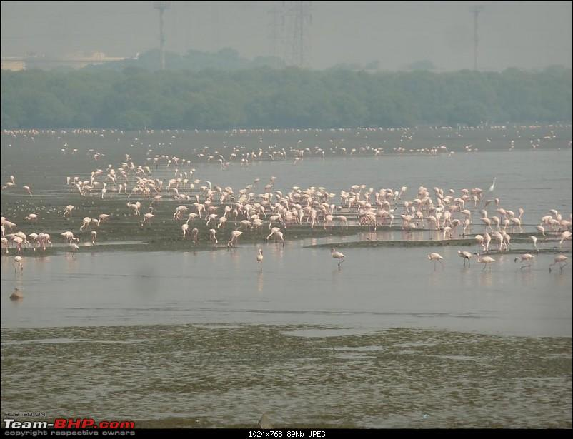 PICS: Flamingoes start flying into Sewri, Mumbai-p1140805-large.jpg