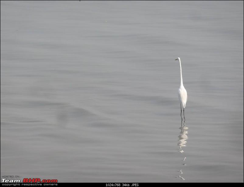 PICS: Flamingoes start flying into Sewri, Mumbai-p1140833-large.jpg