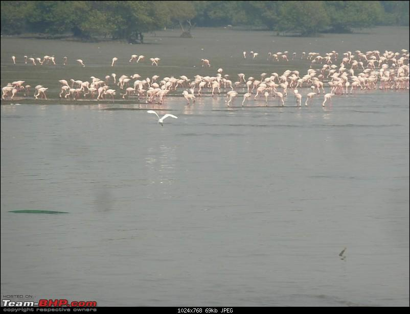 PICS: Flamingoes start flying into Sewri, Mumbai-p1140838-large.jpg