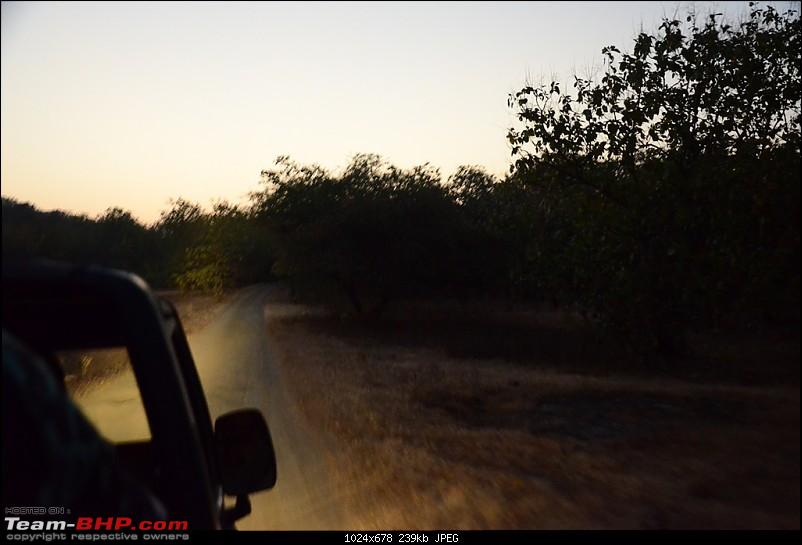 The Mumbai cheetah goes to greet the Sasan Gir Lion (A Gujarat travelogue)-dsc_0091.jpg
