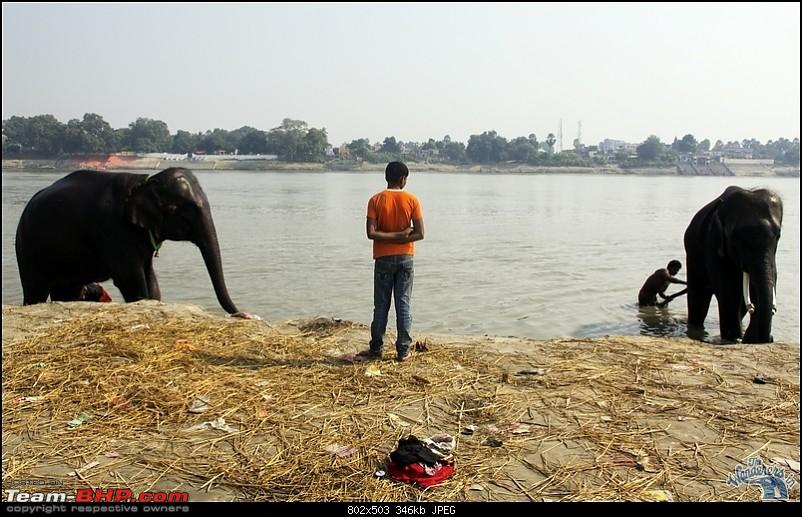 Bihar - A Bullet ride to Sonepur Mela & a Safari drive to Valmiki National Park-sonepur22.jpg