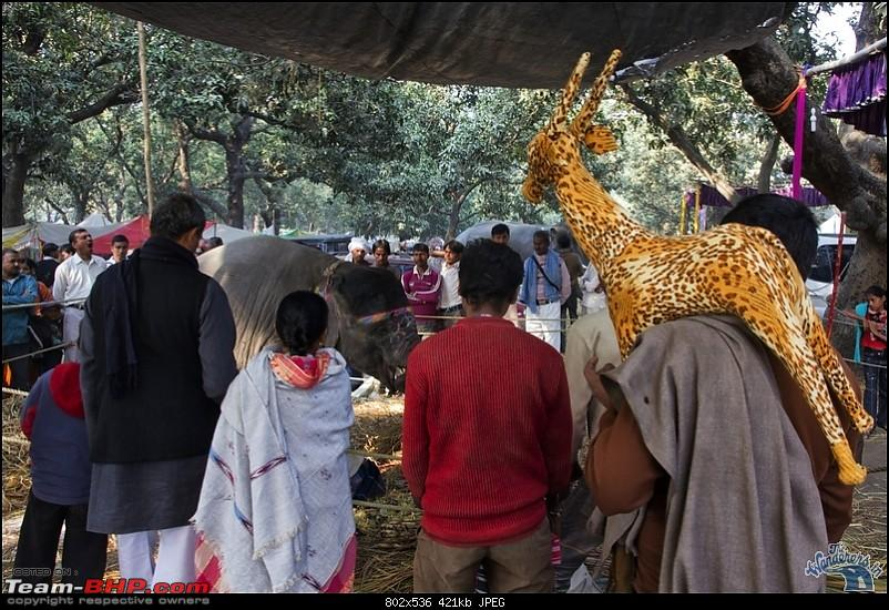Bihar - A Bullet ride to Sonepur Mela & a Safari drive to Valmiki National Park-sonepur53.jpg