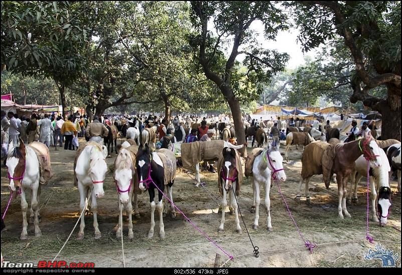 Bihar - A Bullet ride to Sonepur Mela & a Safari drive to Valmiki National Park-sonepur71.jpg