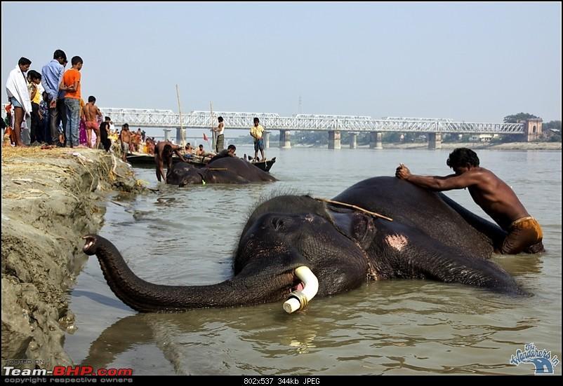 Bihar - A Bullet ride to Sonepur Mela & a Safari drive to Valmiki National Park-sonepur21.jpg