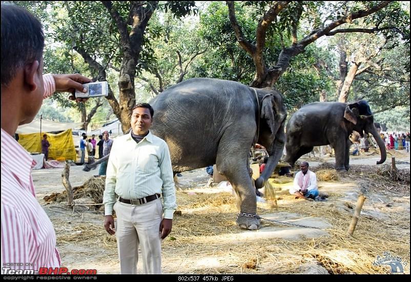 Bihar - A Bullet ride to Sonepur Mela & a Safari drive to Valmiki National Park-sonepur56.jpg