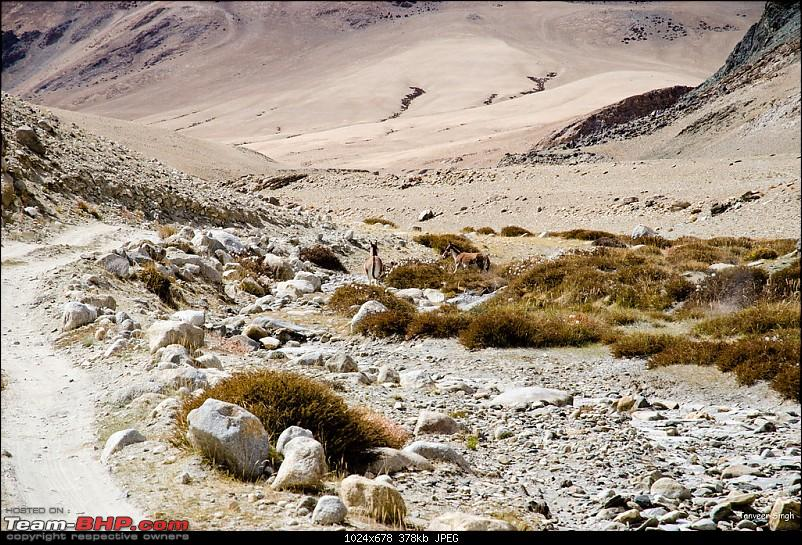 18 Passes, 15 lakes and 2 breakdowns : Ladakh and Lahaul call again-dsc_dsc_6574_lrxl.jpg