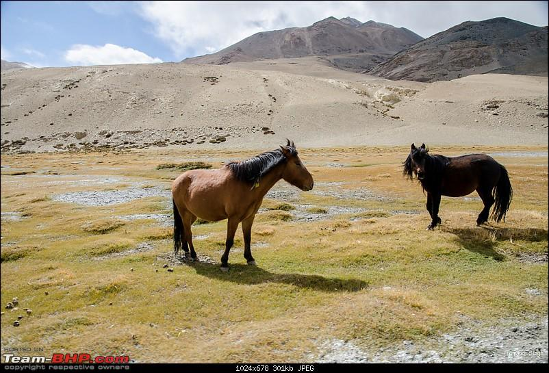 18 Passes, 15 lakes and 2 breakdowns : Ladakh and Lahaul call again-dsc_dsc_6578_lrxl.jpg