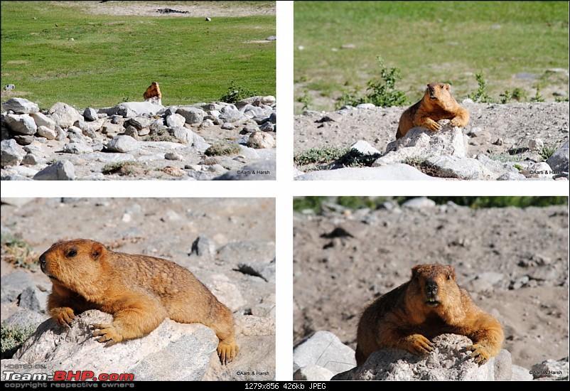 Six Wanderers Ride to Ladakh-09dsc_6530.jpg