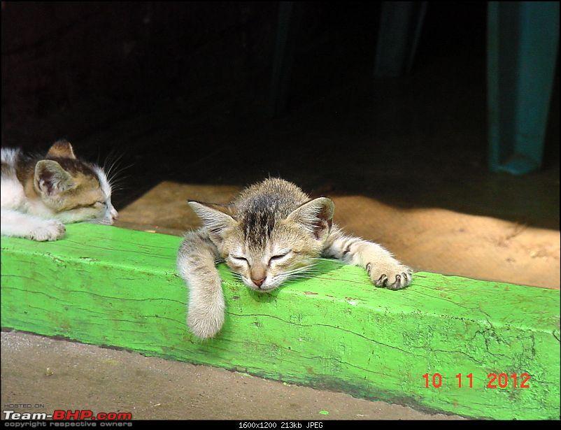 Diwali trip to Uttar Kannada! - Pune to Sirsi, Banavasi and around-kitten.jpg