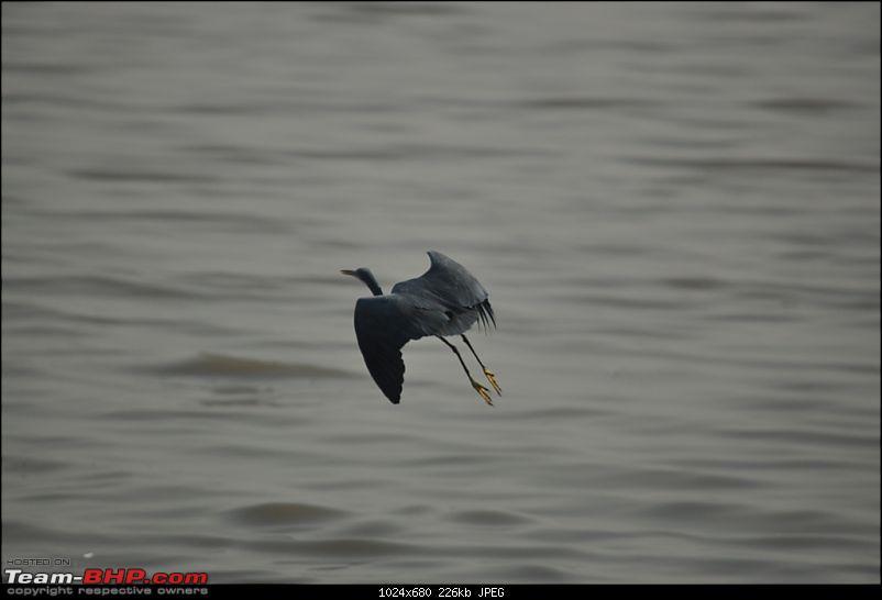 Flamingo watching at Sewri-Mumbai-dsc_0618.jpg