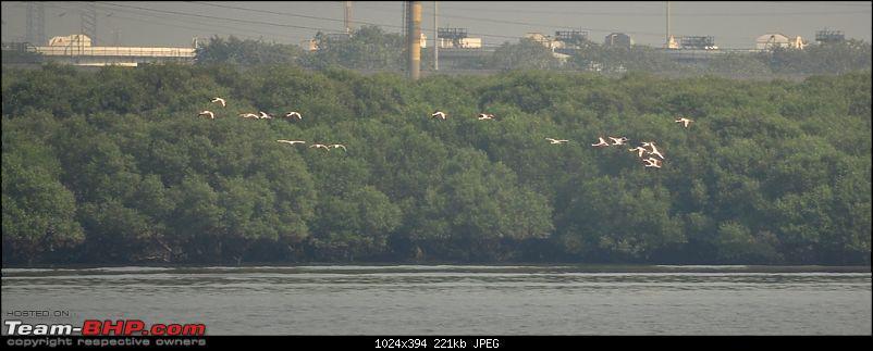 Flamingo watching at Sewri-Mumbai-dsc_0626.jpg