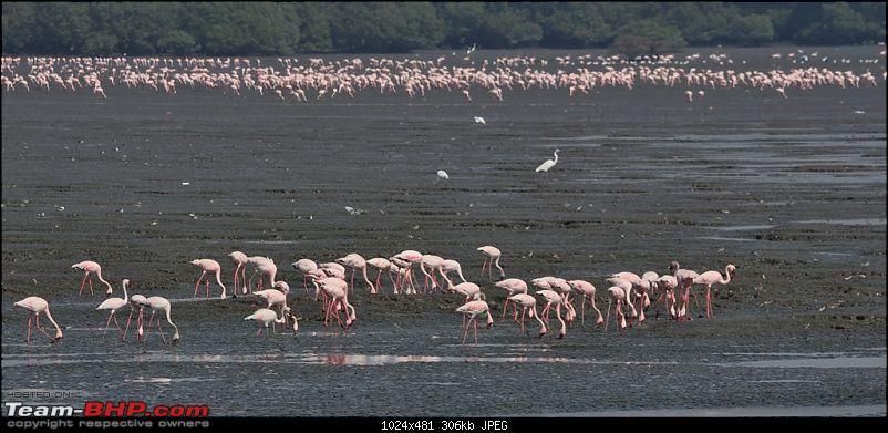 Flamingo watching at Sewri-Mumbai-dsc_0220.jpg