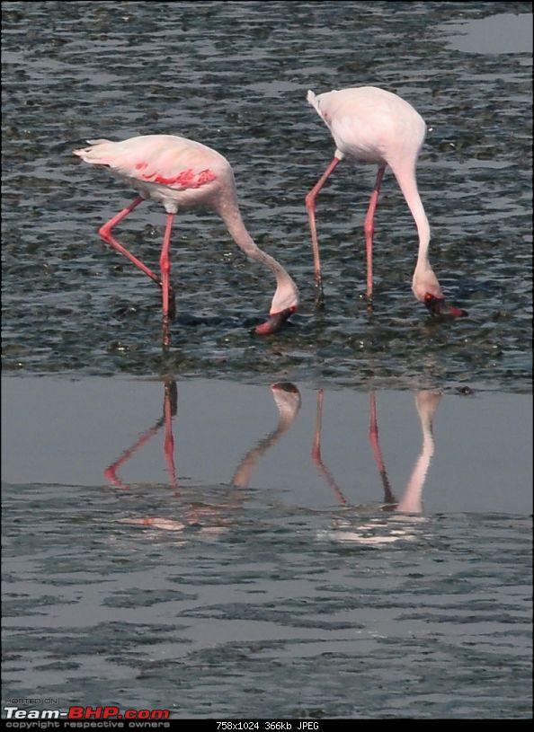 Flamingo watching at Sewri-Mumbai-dsc_0280.jpg