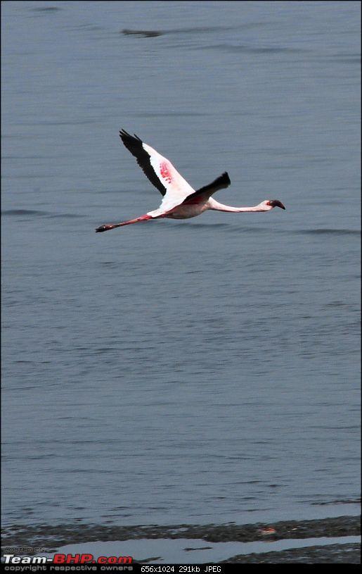 Flamingo watching at Sewri-Mumbai-dsc_0356.jpg
