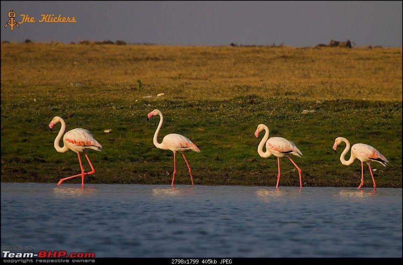 Birding at its best. EDIT: December 2015 updates!-greater-flamingo-1.jpg