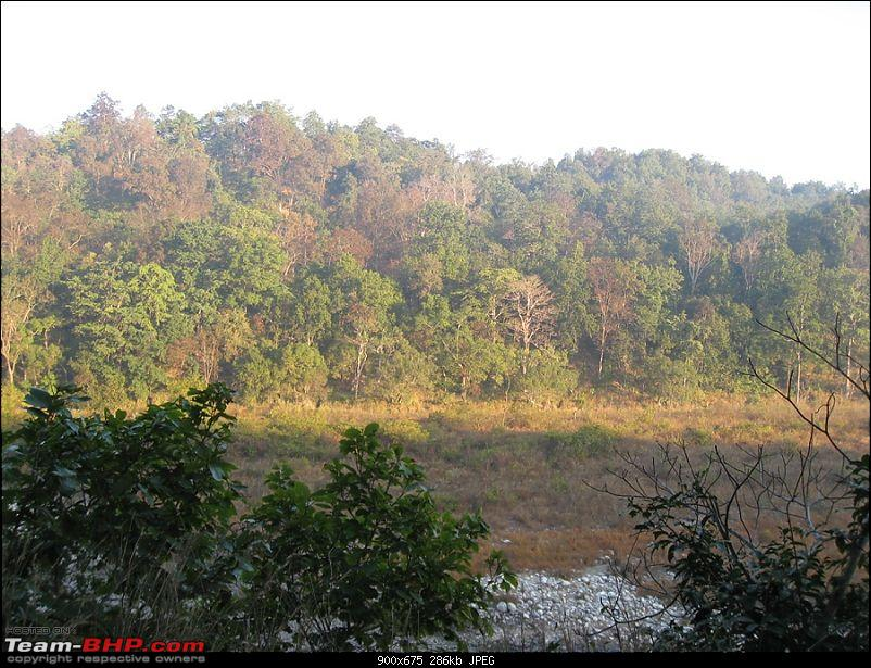Different Shades of Green-A Trip To Jim Corbett National Park-img_1974.jpg