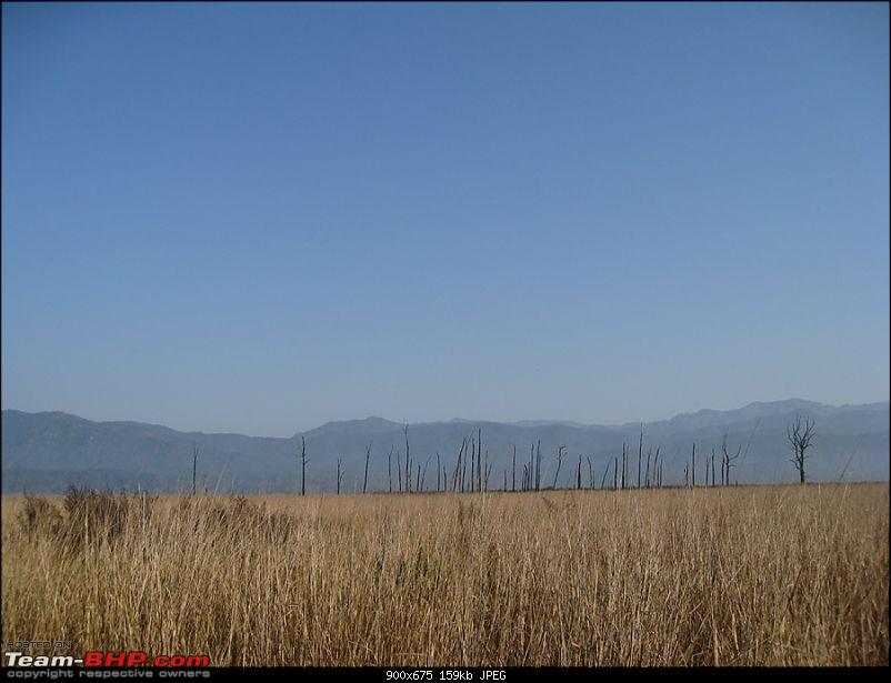 Different Shades of Green-A Trip To Jim Corbett National Park-img_1983.jpg