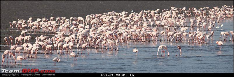 PICS: Flamingoes start flying into Sewri, Mumbai-img_4499.jpg