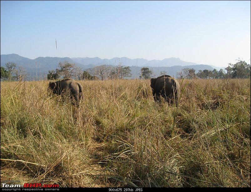Different Shades of Green-A Trip To Jim Corbett National Park-img_2001.jpg