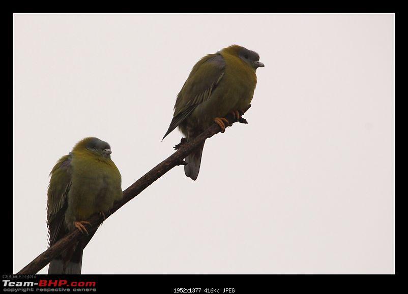 Keoladeo National Park - Bharatpur-0007.jpg