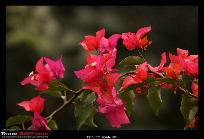Keoladeo National Park - Bharatpur-0009.jpg