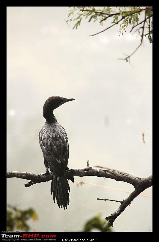 Keoladeo National Park - Bharatpur-0024.jpg