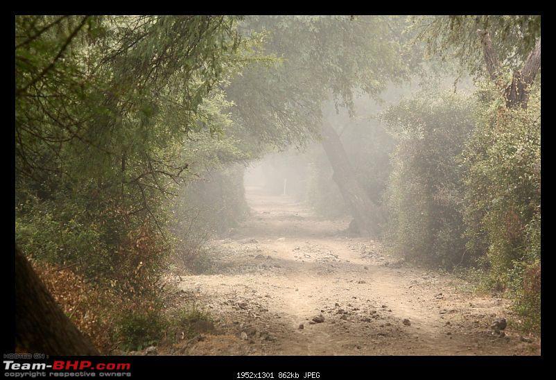 Keoladeo National Park - Bharatpur-0025.jpg