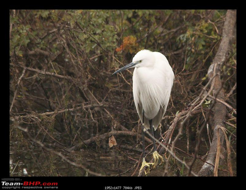 Keoladeo National Park - Bharatpur-0032.jpg