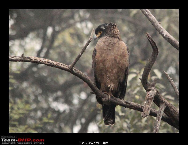 Keoladeo National Park - Bharatpur-0040.jpg