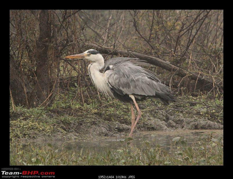 Keoladeo National Park - Bharatpur-0056.jpg