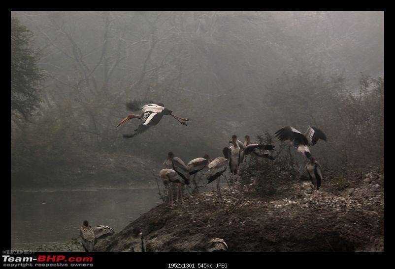Keoladeo National Park - Bharatpur-0060.jpg