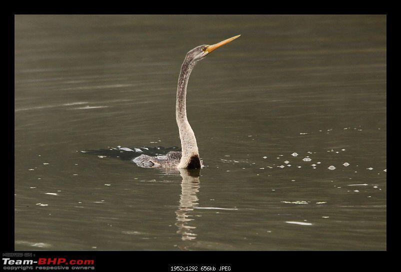 Keoladeo National Park - Bharatpur-0064.jpg