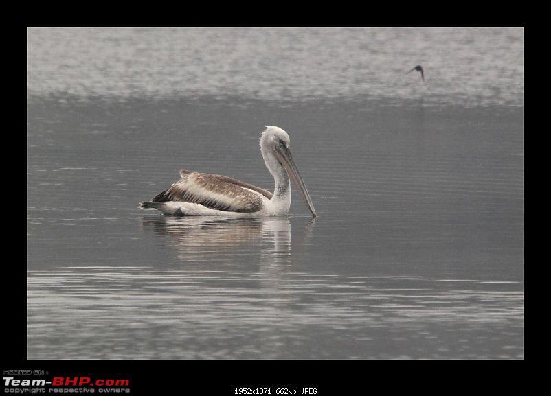 Keoladeo National Park - Bharatpur-0068.jpg
